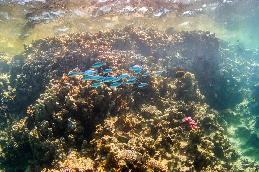 Salzwasser Rotes Meer - Tauchpixel